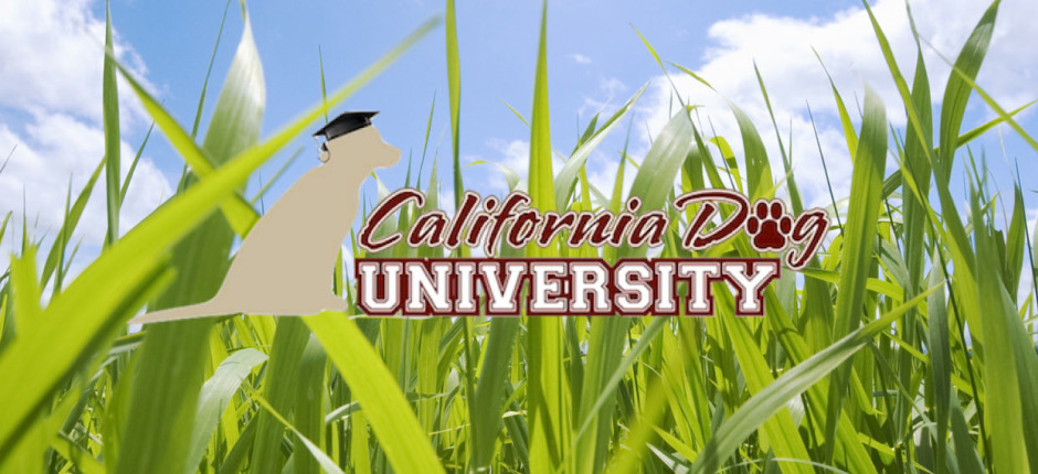 California Dog University